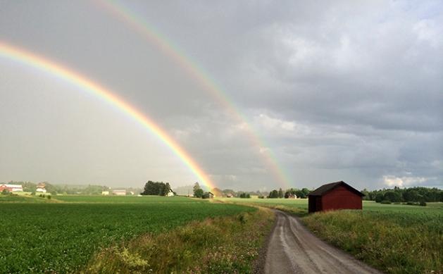 rainbowpadda