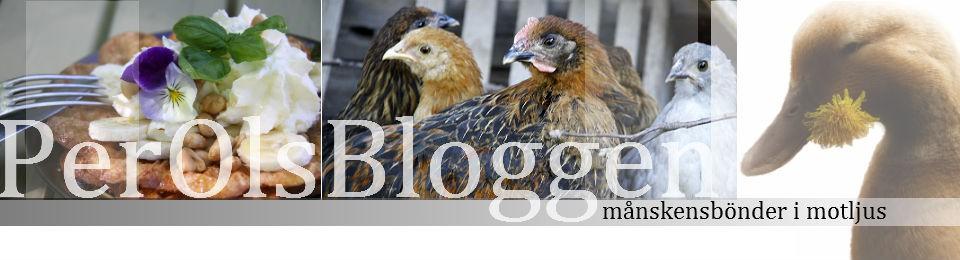 perolsbloggen