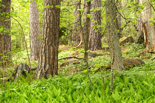 springforest